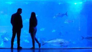 前回No.1 シャバーニ 率いるゴリラはまさかの5位…|すみだ水族館の冬季限定演出 月とクラゲ :時事ドット…|おたる水族館 今季の通常営業終了 入館者前年比5割強…|他